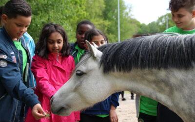 Werken als een Paard, Vakantieschool